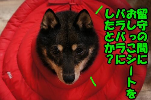 DSC04014.jpg