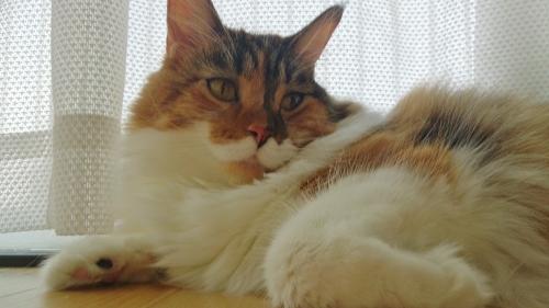 小豆猫_窓辺2