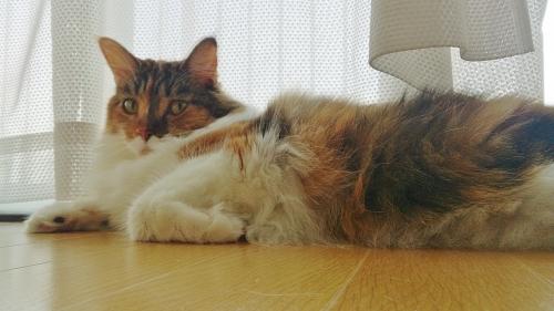 小豆猫_窓辺1