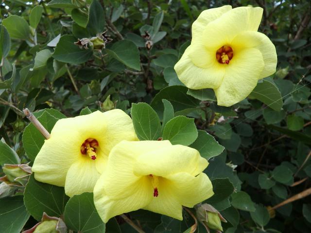 花は美しいレモンイエロー