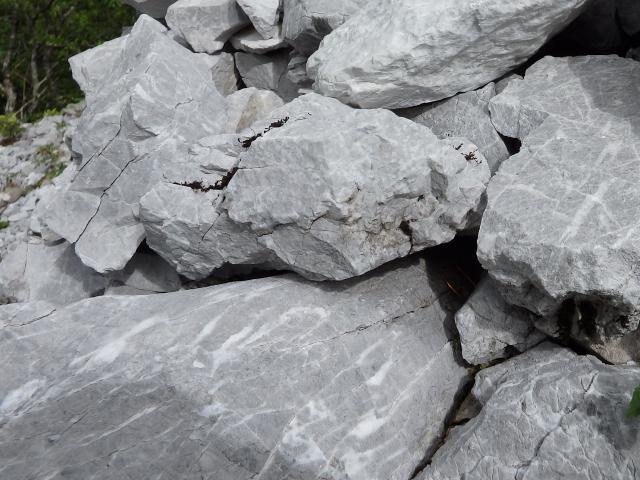 自生地の地質は石灰岩層