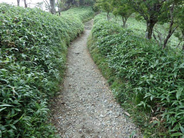 立派な登山道
