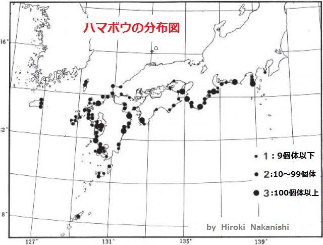 ハマボウの分布図