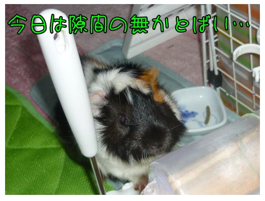 20150814桃太郎お盆5