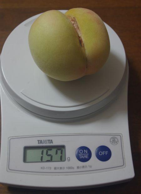150727-白麗1