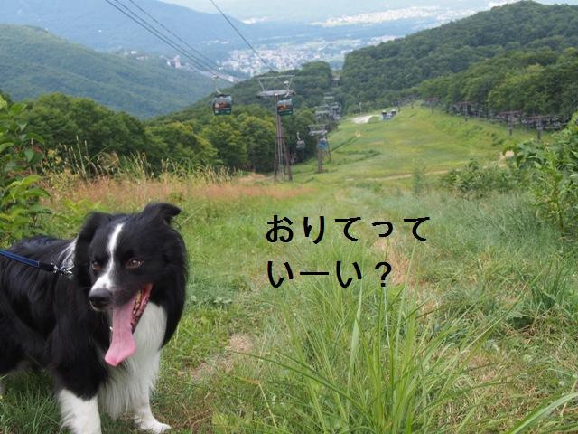 20150812_26-1.jpg