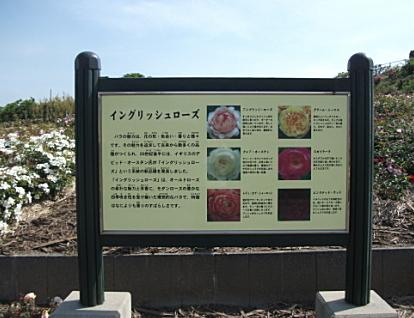 kanoyaFC6.jpeg