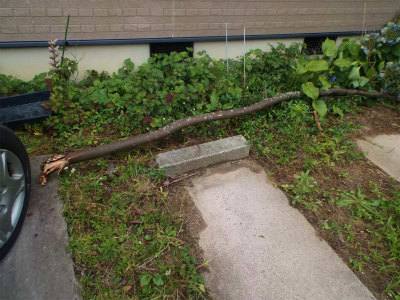 7.17家の前の木も折れた