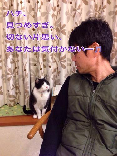 eisanhachi02.jpg