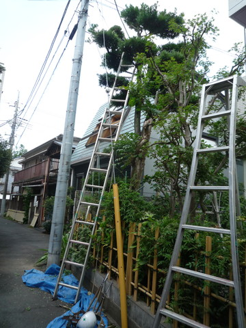 2連梯子9