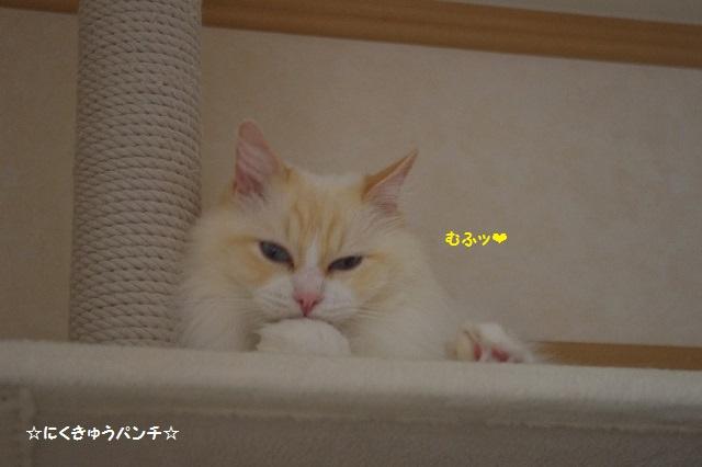 150815IMGP4928.jpg