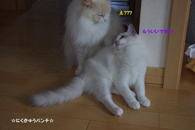 150816mIMGP4913.jpg