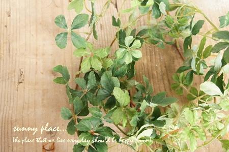 minicissus garland1-blog
