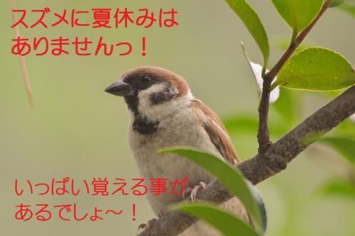 030_201507201713512a2.jpg
