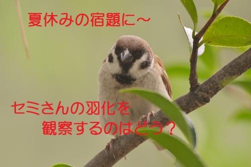 040_20150720171352e86.jpg