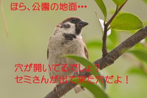 050_201507201713546a8.jpg