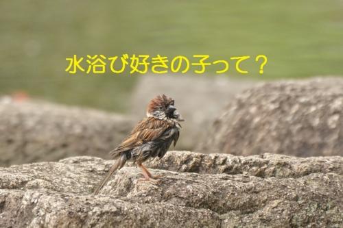 060_20150726211639de5.jpg
