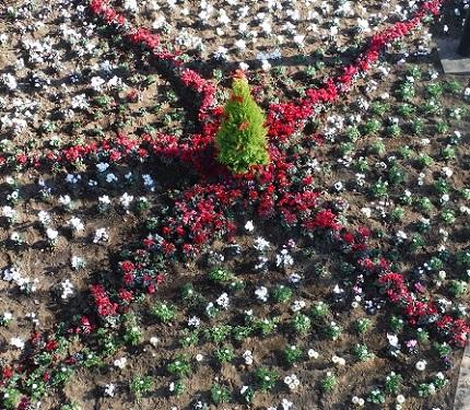 2014花壇クリスマス星