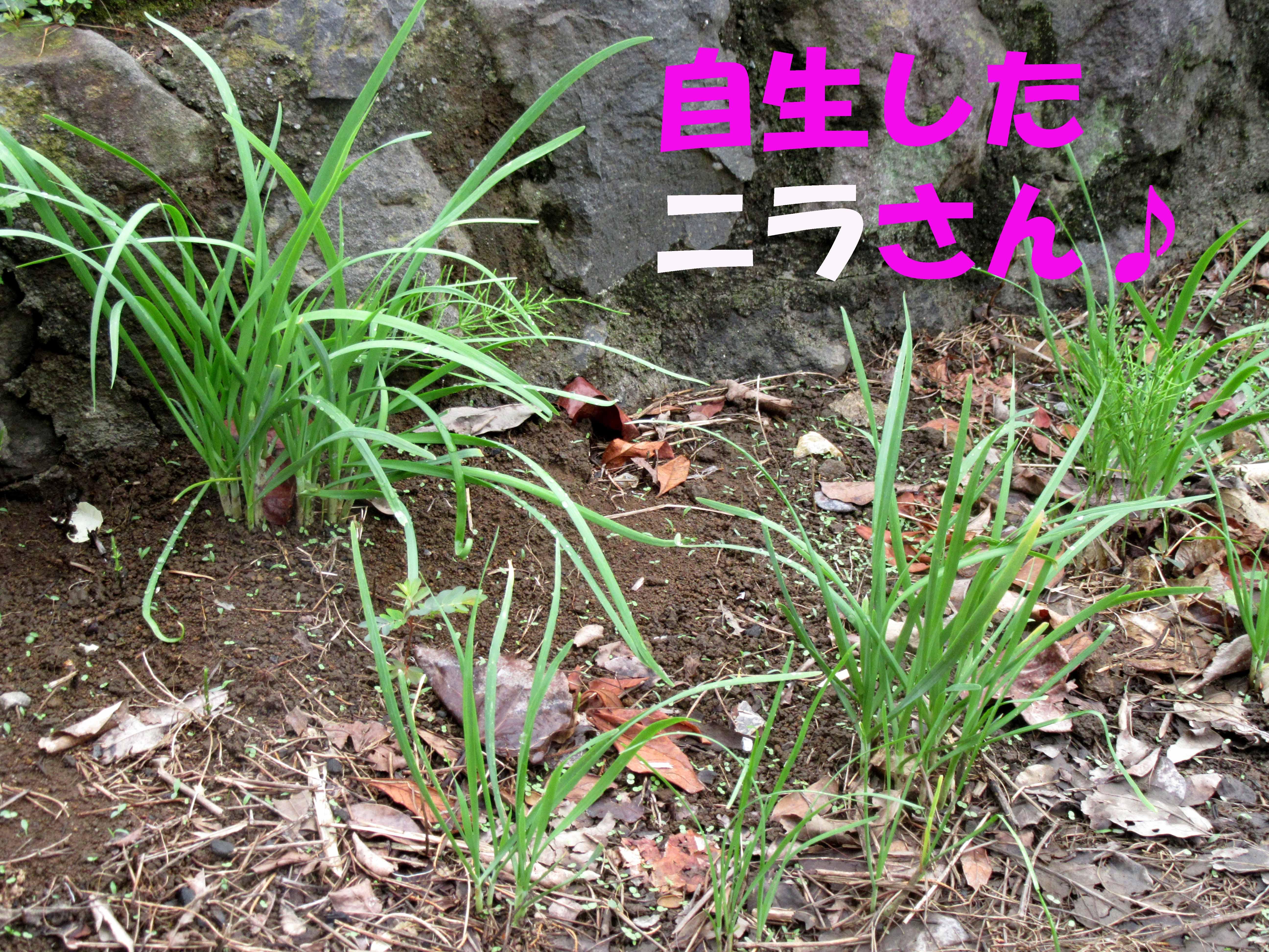 2015_0820_110126-IMG_3912のコピー