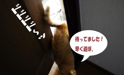凄い早さで猫部屋へ^d^s^s^d^sdsddコピー
