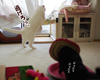 うわ~くーちゃんーsd-ああーsdsdssコピー