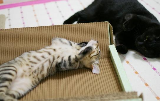 懐かしいクーと子猫ちょこt^-^^d^sd