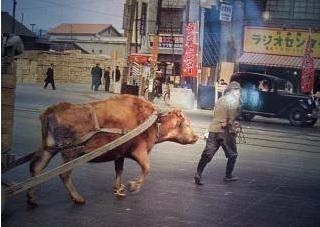 2015-8-20くびき1951年の秋葉原での牛車