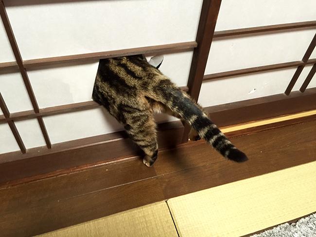 blog_000004648.jpg