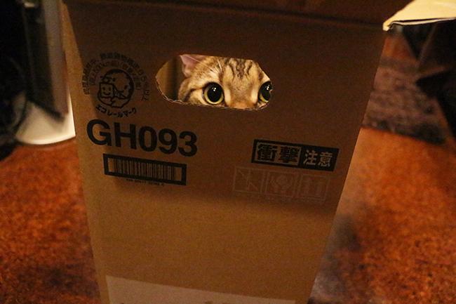 blog_000004719.jpg