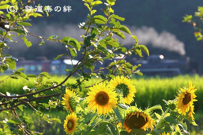 20150808上野尻