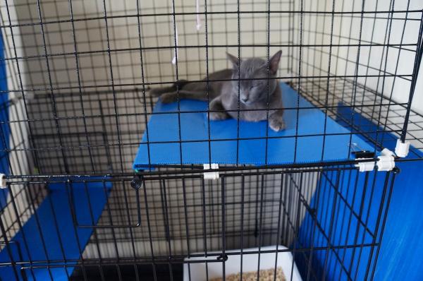 diy cage 8