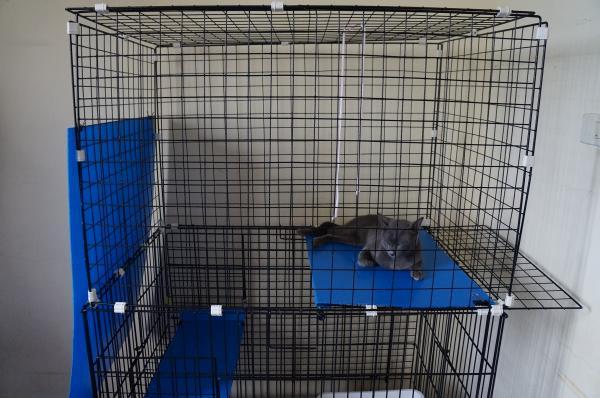 diy cage 9