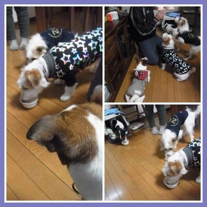 cats67ygn.jpg