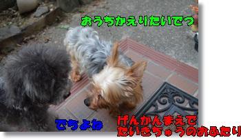 DSC_0647_20150816082244bb4.jpg