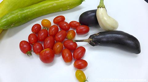 収穫した野菜2015a