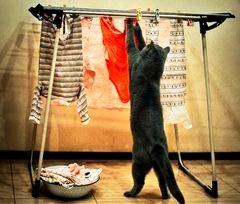 洗濯物干し中