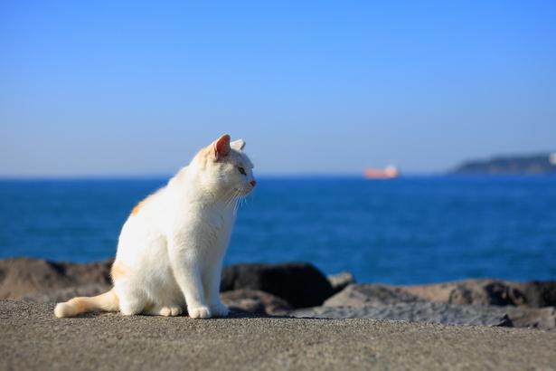 海を見る猫