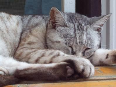 ベランダで寝てる地域猫の寝顔をデジカメ撮影