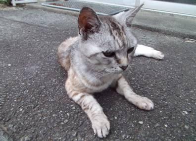 老猫チータが久しぶりに我が家に来てた瞬間