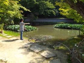 大きな池の鯉にエサを¥20で売っており、鯉たちにエサをやる嫁をデジショット