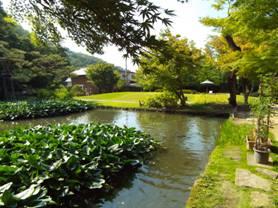 書院造を出ると池やモミジの葉か、ココも秋は美しいだろう。