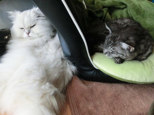 fluffy&yutaka 14