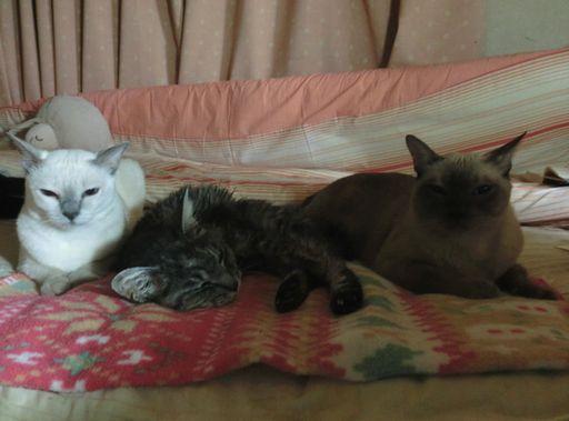 fluffy&hikaru&miu 58