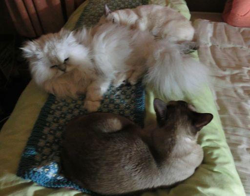 fluffy&hikaru&miu 59