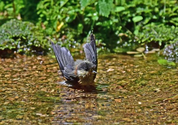 ヤマガラ幼鳥4 -089