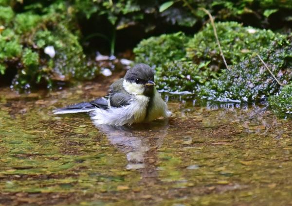 シジュウカラ幼鳥2 -073