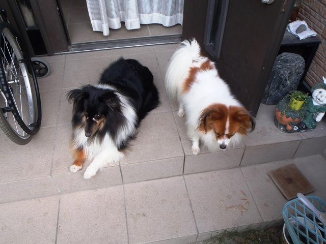 暑い時は犬も外へは出ません20150814