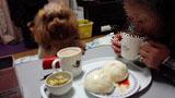 母帰宅・お茶時間4