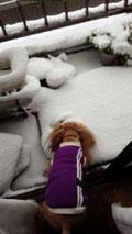 ドカ雪の日2