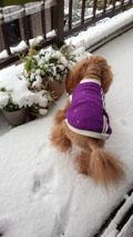 ドカ雪の日4